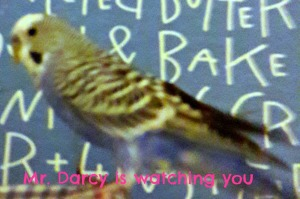 darcy-is-watching-you